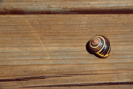Snail shell on wooden board. Top view