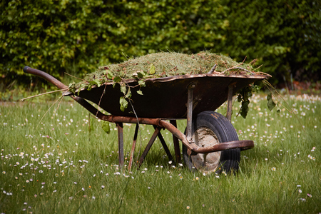 Garden cart with freshly cut green grass large t on the lawn. Garden works