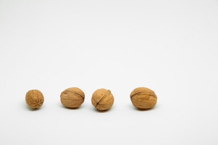 four walnuts in line on white background 写真素材