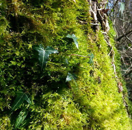 Close-up of green moss with brown fallen leaves from trees Stok Fotoğraf