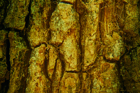 Embossed texture of the brown bark of an oak. perfect image for backgrounds