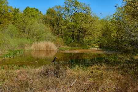 Lake in Orgi Forest in Ulzama. Near the town of Lizaso to be able to walk in the nature between centennial oaks Stock Photo