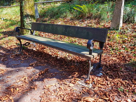 Bench in autumn park. Autumn landscape Stockfoto