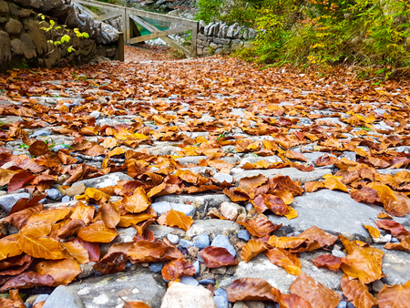 Walk on the autumn road forest in Ordesa y Monte Perdido National Park, Huesca. Spain