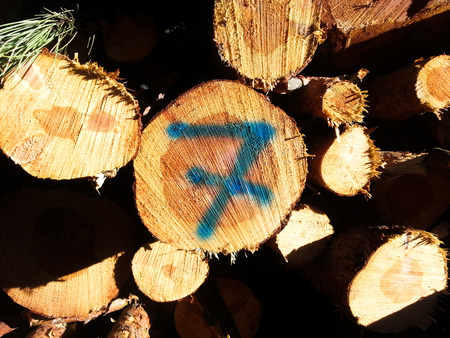 a pile of natural pine logs freshly cut to produce firewood. A log carries the number seven written