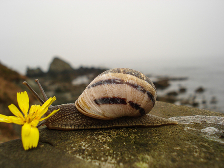 Snail of brown and black bands moving slowly on wooden railing with bottom of view to the sea.