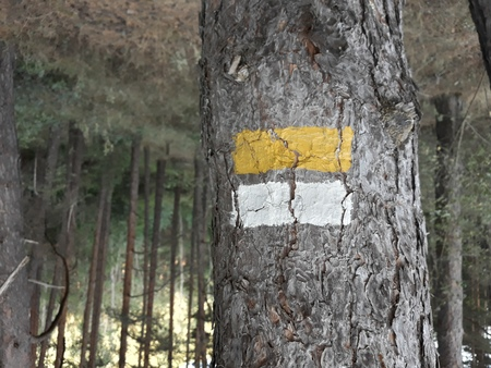 Markings painted in white and yellow on pine bark