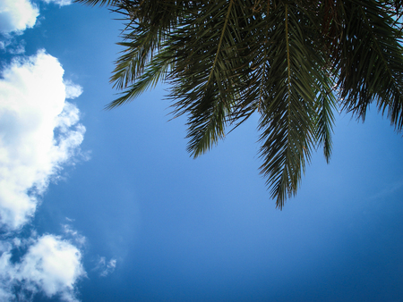 Blue sky background with clouds and branches of palm trees. Lanzarote, Canarias. Spain