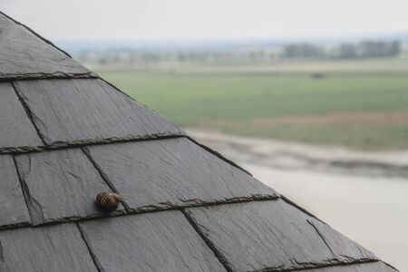 Snail on the roof with slate tiles for backgrounds Stockfoto