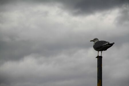 seagull perched on a pole with gray clouds background and hollow available in the image for text