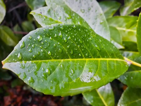 Plant leaves wet after the rainy green intense green color. Stockfoto