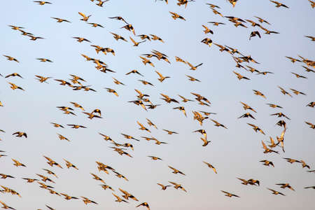 Abstract nature. Flying birds. Blue sky background. Banque d'images