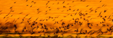 Abstract nature. Flying blur birds. Nature background. Фото со стока