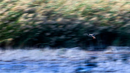 Abstract nature. Flying birds. Motion blur background.