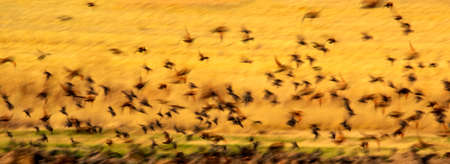 Abstract nature. Flying blur birds. Nature background.