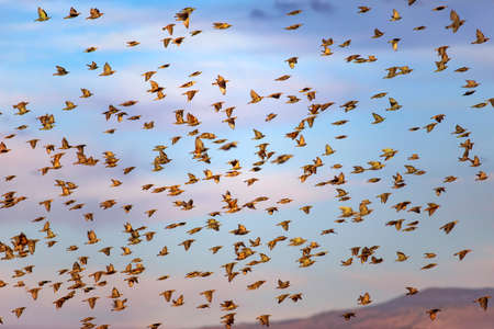 Abstract nature. Flying birds. Blue sky background.