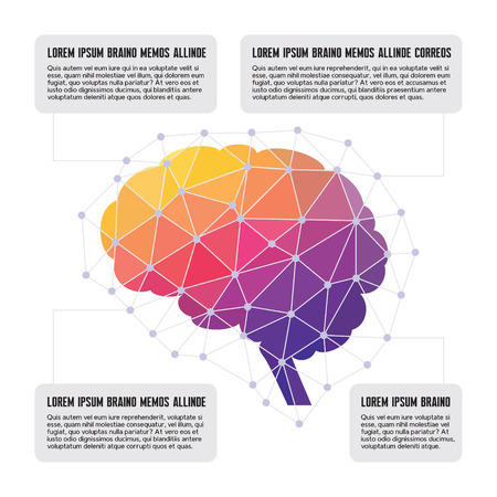 Human Brain - Colored Polygon Infographic Vector