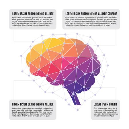 Human Brain - Colored Polygon Infographic Vector