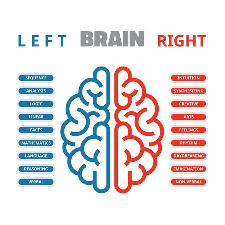 Links en rechts menselijke hersenen vector illustratie voor presentatie, brochure, website en andere projecten. Links en rechts menselijk brein infographic.