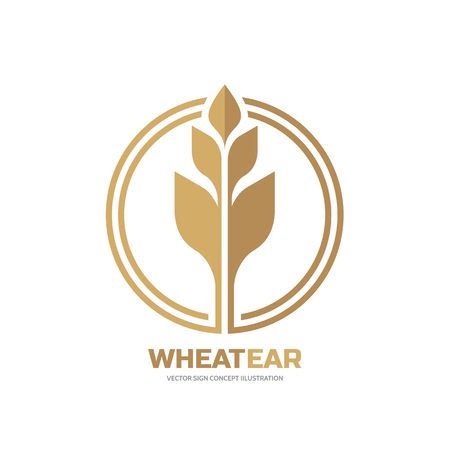 spica: Ear of wheat - vector logo template creative illustration. Cereal organic sign. Ecology symbol. Bio nature insignia. Agriculture concept. Design element.
