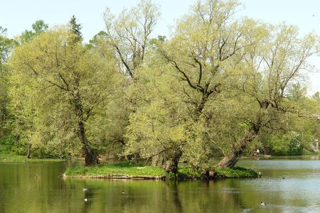 Landscape of palace park with lake in Gatchina, Petersburg photo