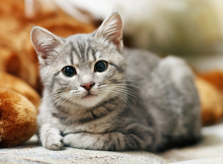 cute pussy: lovely gray pussy is interesting Stock Photo