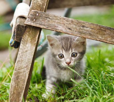 fanny: fanny grey cat  sin  on   green grass Stock Photo