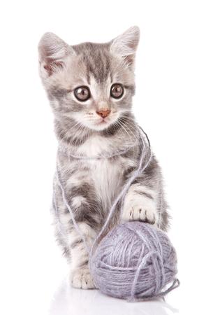 gray tabby: beautiful gray tabby kitten with gray ball  on white background Stock Photo