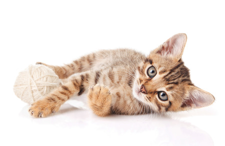 playful tabby kitten with white ball on white background Stock Photo