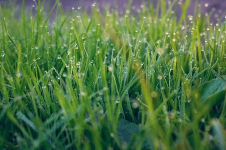 waterdrop: green grass with waterdrop