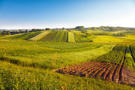 view of agricultural fields Stock Photo