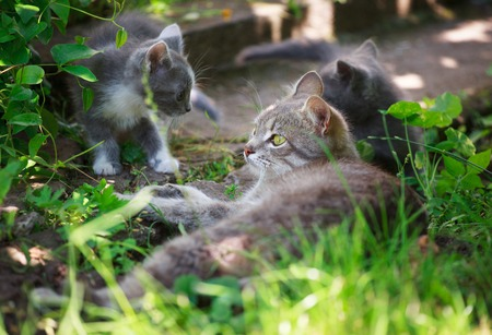 cute kittens: Three cute kittens playing in the grass