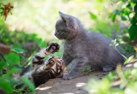 cute kittens: two little cute kittens playing in the grass Stock Photo