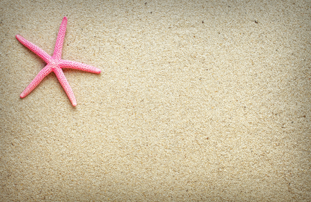 in the sand: Sea shells on sand. Summer beach background. Top view. place for text