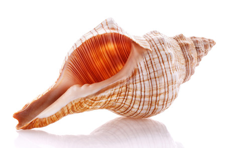 Sea shell isolated on white background. Close up Stock Photo