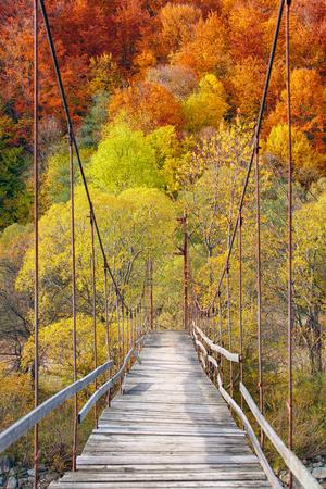 bridge in nature: Suspension bridge in the amazing autumn forest