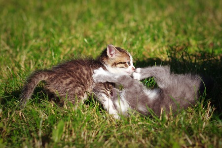 cute kittens: Two cute kittens playing on the lawn Stock Photo