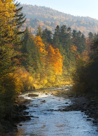 Landscape mountain river in autumn forest at sunlight. Nature background. Stock Photo