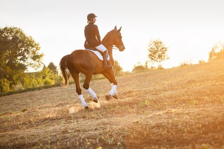 equitation: woman riding a horse in light of sunset. equitation,