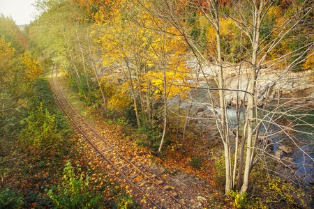forest railway: old railway road in beatiful colorful autumn forest,top view