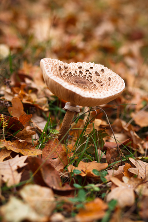 Mushroom growing in the forest Stock Photo