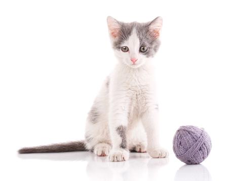 eye ball: Threaded games. cat poster.