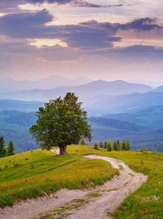 heuvel van een boom. Berglandschap. Eenzame boom in de buurt van het wandelpad. Toerisme en de actieve tegenhanger van het concept. hdr