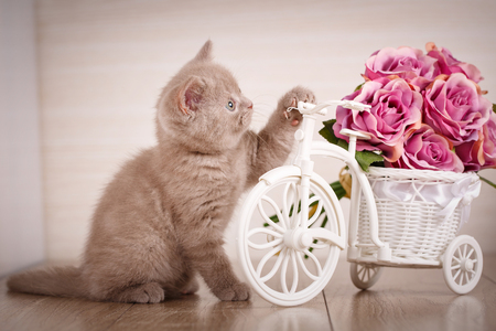 The cat is playing with a decorative pot in the form of a bicycle, putting a paw on the steering wheel. Stock Photo