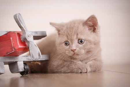 The kitty lies near the toy plane. Young cat pilot. Good as background, wallpaper. The cat is playing with a wooden plane.