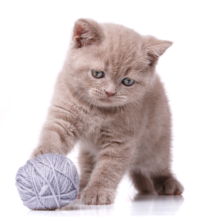 Cat. A kitten is playing. Game with a tangle of threads. Hunting for threads.