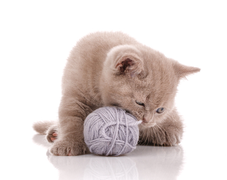 Cat. A kitten is playing. Game with a tangle of threads. Stock Photo