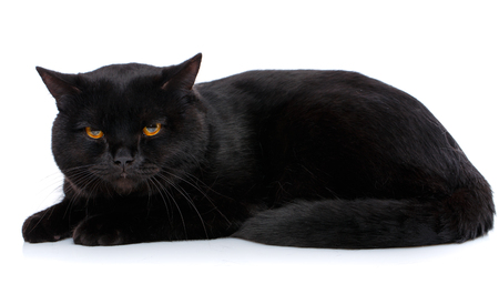 Beautiful cat of black coloring on a white