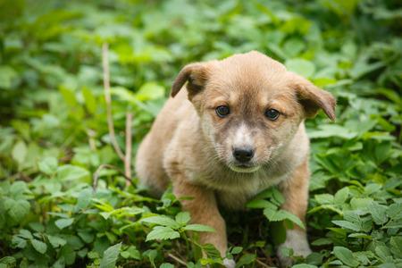 Unhappy homeless dog that lives underground. Dog in garden