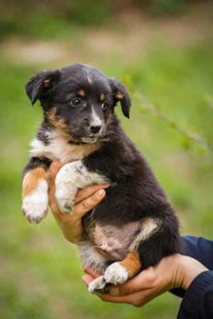 Homeless dog looking for a home. The problem of homeless animals. puppy on the hands of a veterinarian. Help animals.